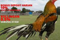 Agen Sabung Ayam Online Indonesia